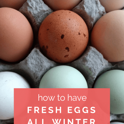 How to Have Fresh Chicken Eggs All Winter Long
