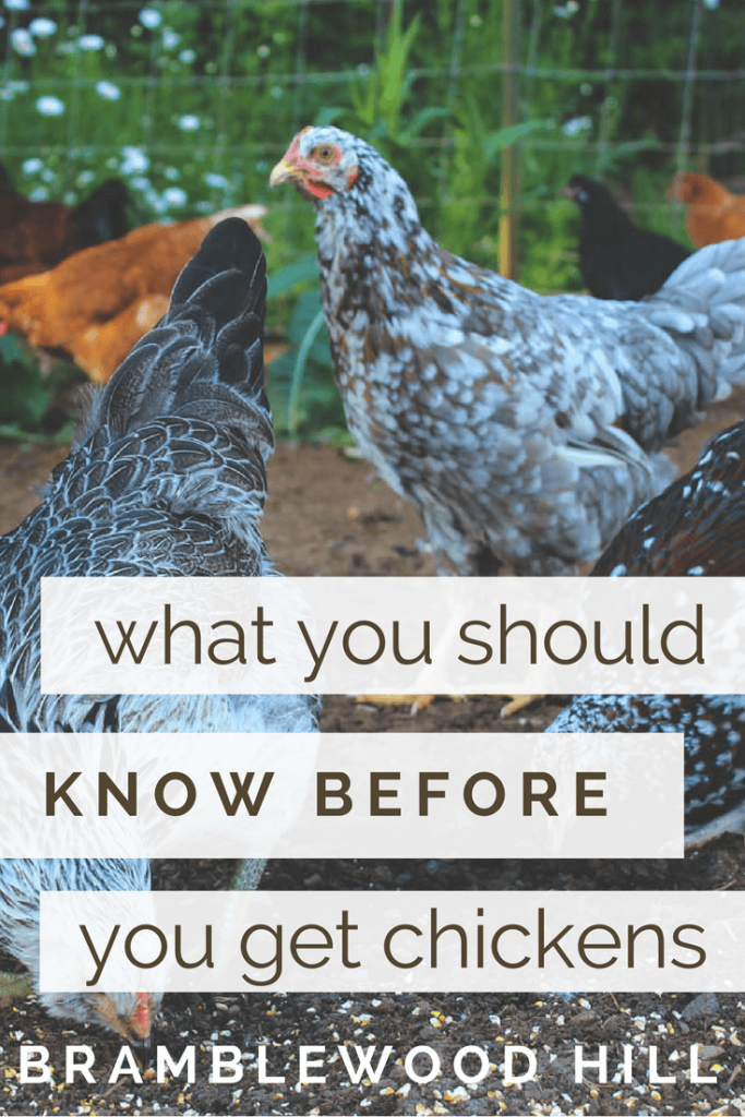 Everything you need to consider before getting your first chickens.