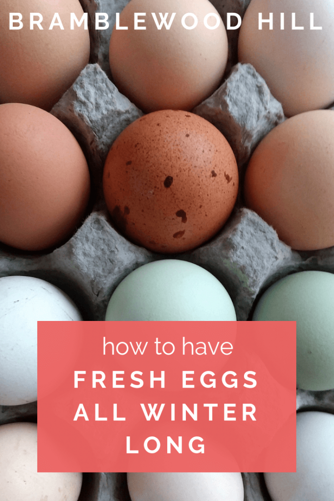 Learn how to have fresh eggs from your chickens all winter long!