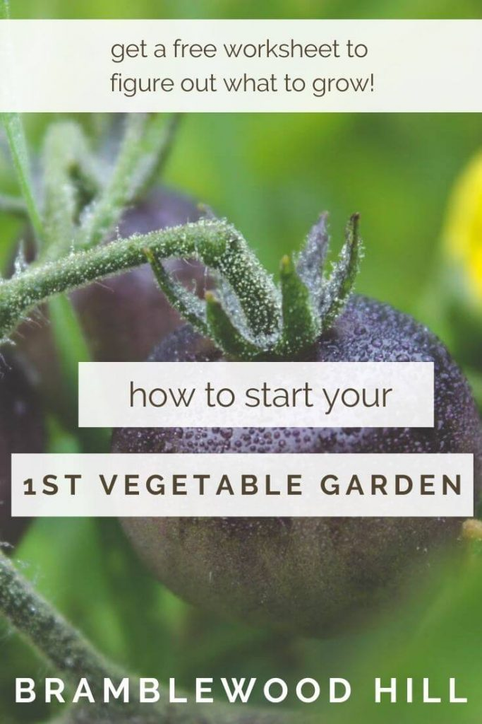 For many, growing a garden is their first step to leading a healthier lifestyle. Starting your first vegetable garden doesn't have to be hard.