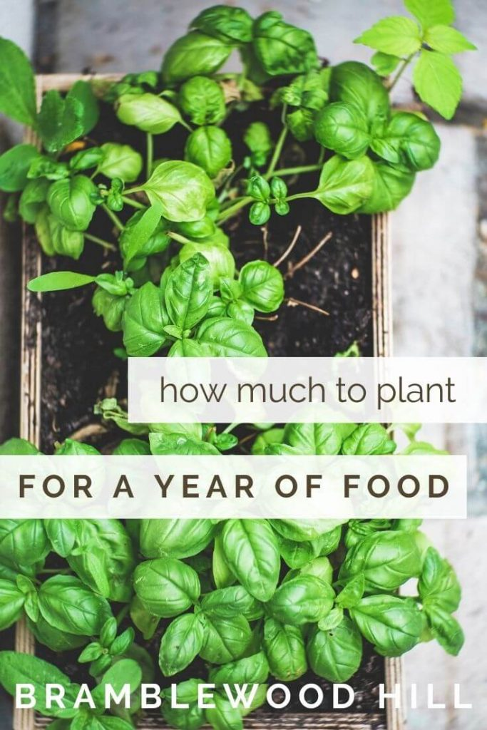 Want to know how much to plant per person in your garden for a year's worth of food? Learn the planting amounts you need to know!